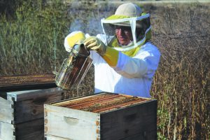 Beehive Safety: Nakiessa smoking out the bees.  Photo by Clara Berks- Staff Photographer