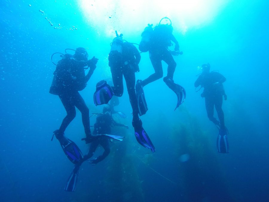Scuba Excursion: Members of CLU Dive Club explored Catalina Island this past weekend as its final phase before receiving their open water SCUBA certifications. Photo courtesy of  Kim Elsner- Lead Instructor of PCH Scuba