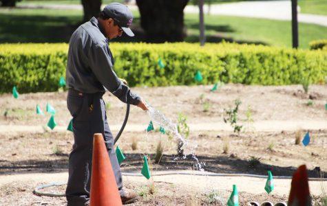 SEEd Garden Expanding Environmental Footprint With Garden Near Library